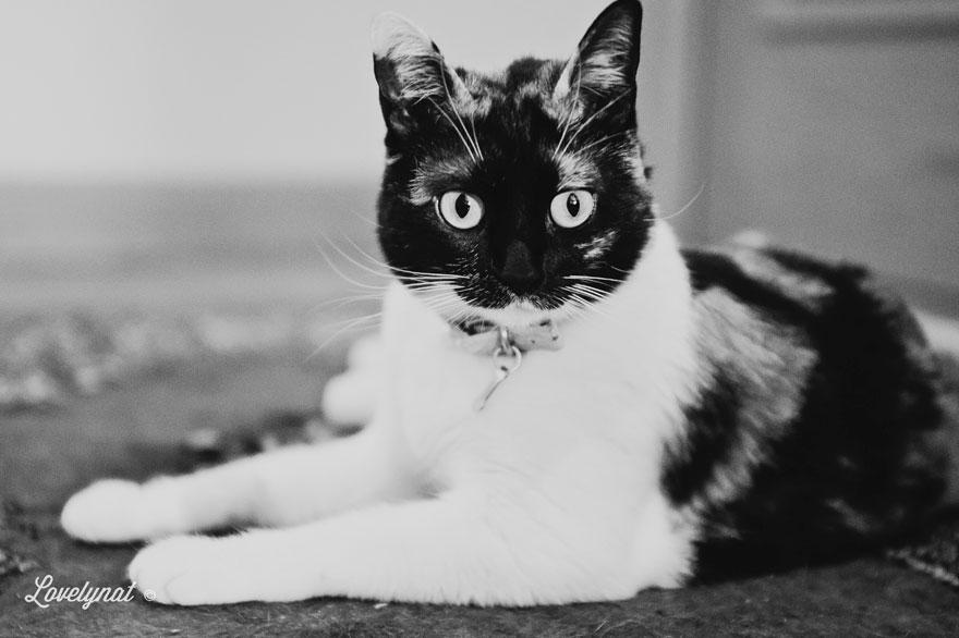 Pets_Lulu_Lovelynat-Photography_006