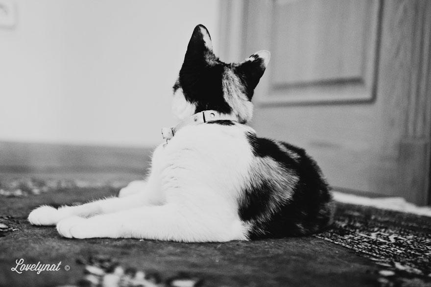 Pets_Lulu_Lovelynat-Photography_007