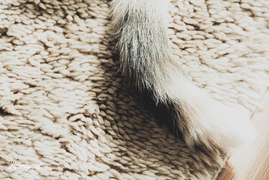 Pets_Lulu_Lovelynat-Photography_012-(1)