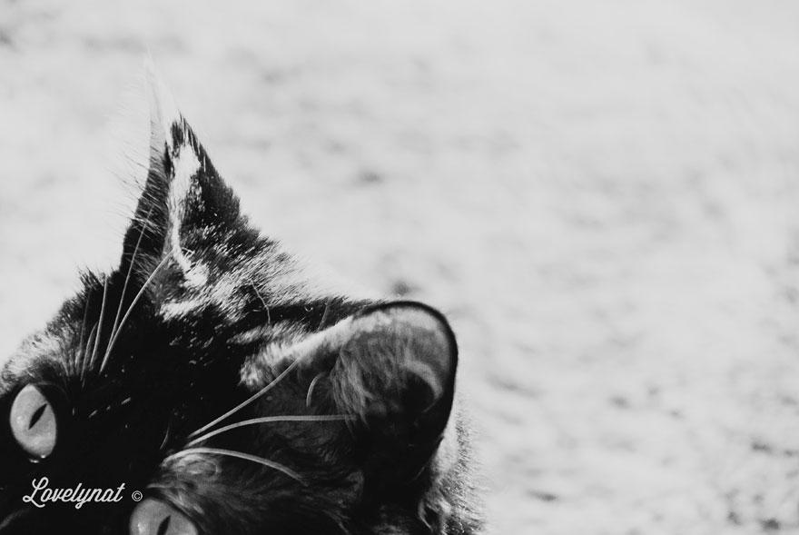 Pets_Lulu_Lovelynat-Photography_014