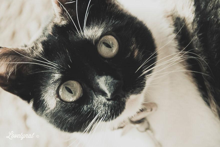 Pets_Lulu_Lovelynat-Photography_017-(1)