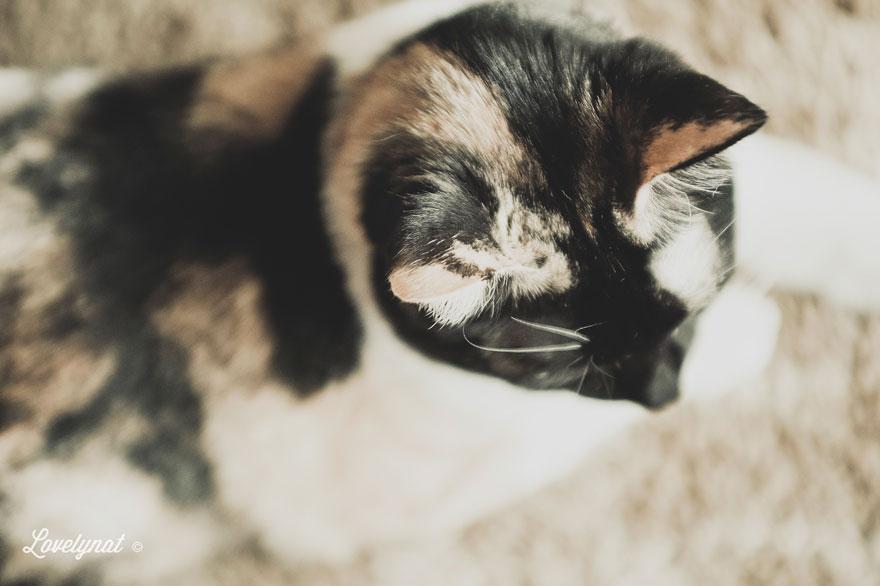 Pets_Lulu_Lovelynat-Photography_021-(1)