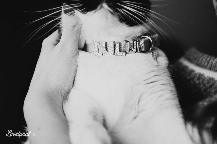 Pets_Lulu_Lovelynat-Photography_023