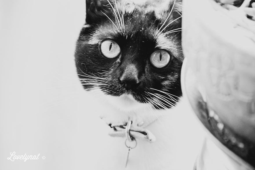 Pets_Lulu_Lovelynat-Photography_025