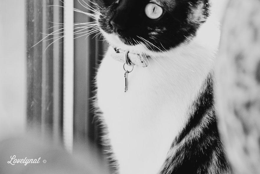 Pets_Lulu_Lovelynat-Photography_030
