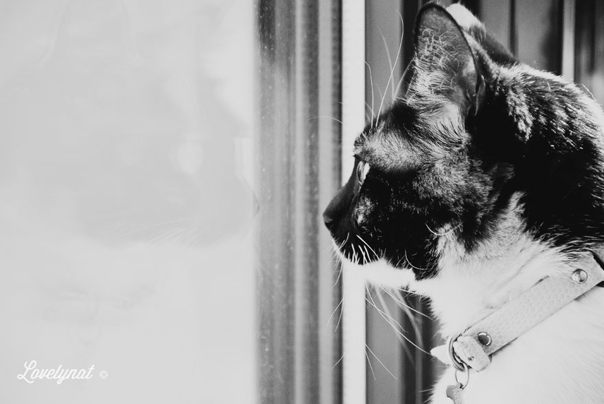 Pets_Lulu_Lovelynat-Photography_032