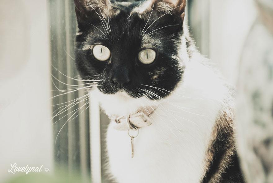 Pets_Lulu_Lovelynat-Photography_035-(1)