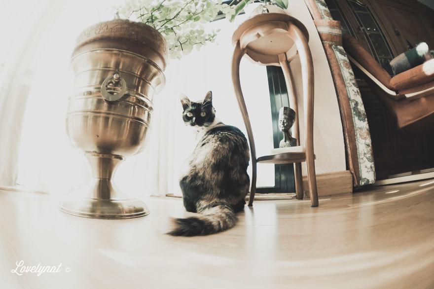 Pets_Lulu_Lovelynat-Photography_037-(1)