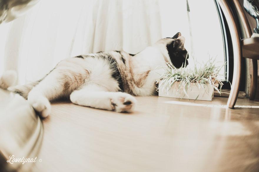 Pets_Lulu_Lovelynat-Photography_040-(1)