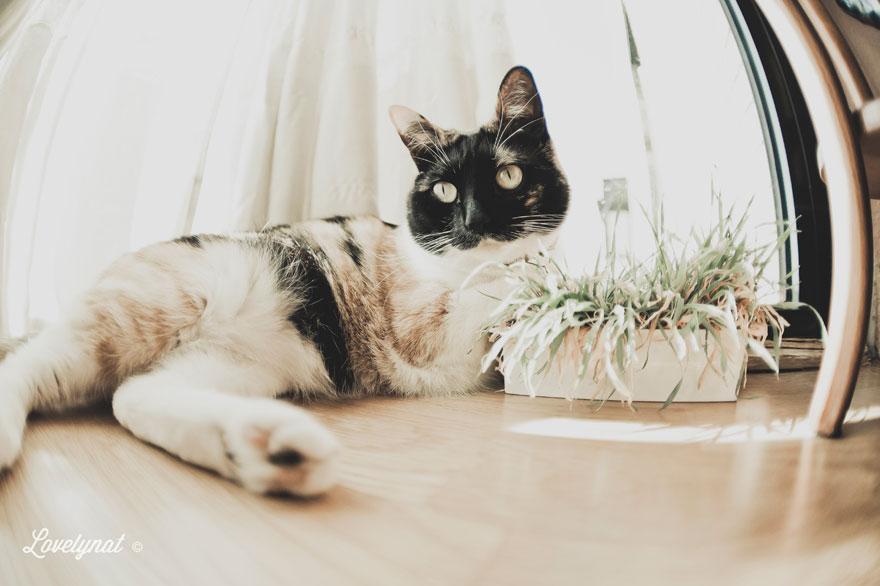 Pets_Lulu_Lovelynat-Photography_043-(1)