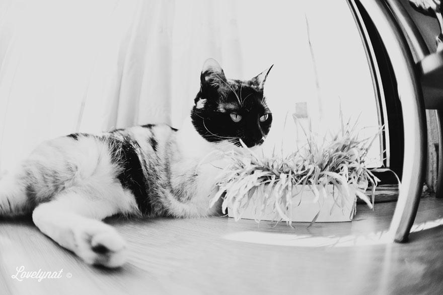 Pets_Lulu_Lovelynat-Photography_044