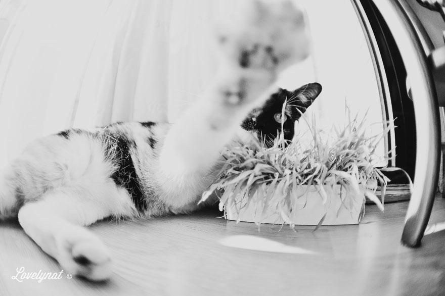 Pets_Lulu_Lovelynat-Photography_045