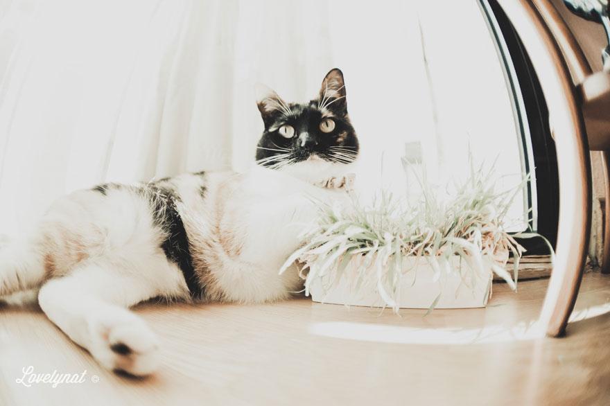Pets_Lulu_Lovelynat-Photography_046-(1)