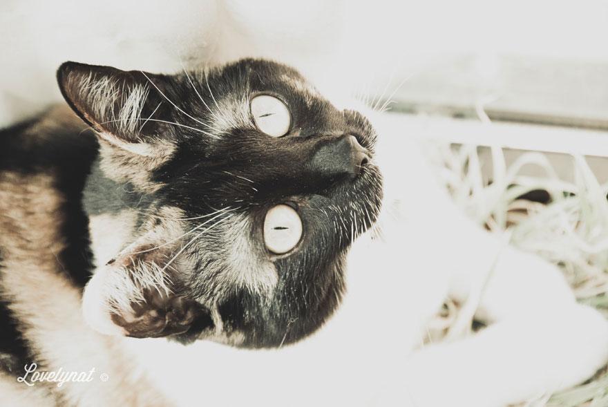 Pets_Lulu_Lovelynat-Photography_049-(1)