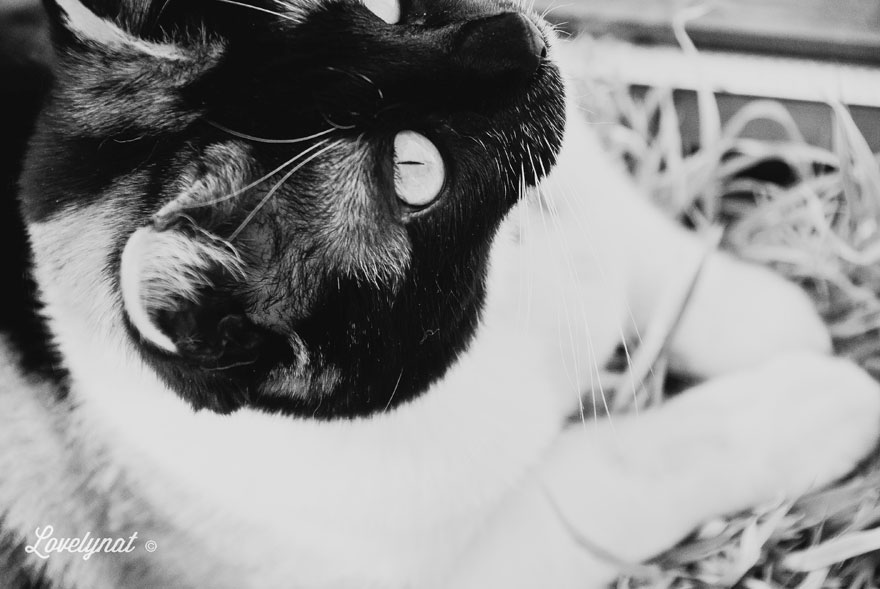 Pets_Lulu_Lovelynat-Photography_050