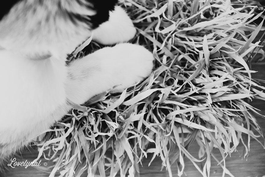 Pets_Lulu_Lovelynat-Photography_052