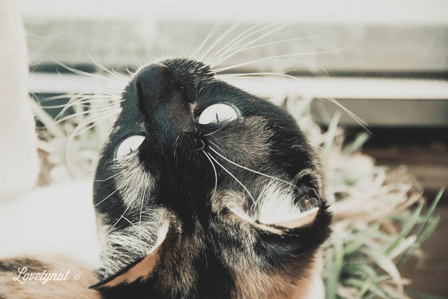 Pets_Lulu_Lovelynat-Photography_055-(1)