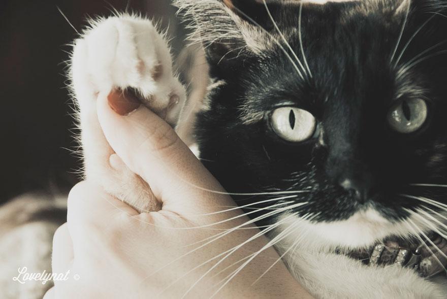 Pets_Lulu_Lovelynat-Photography_068-(1)