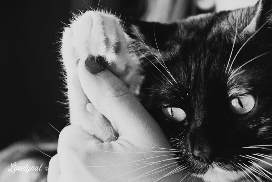 Pets_Lulu_Lovelynat-Photography_070