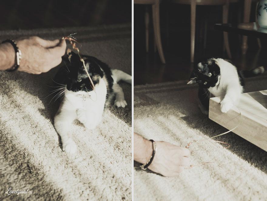 Pets_Lulu_Lovelynat-Photography_077-(1)