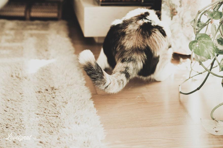 Pets_Lulu_Lovelynat-Photography_081-(1)
