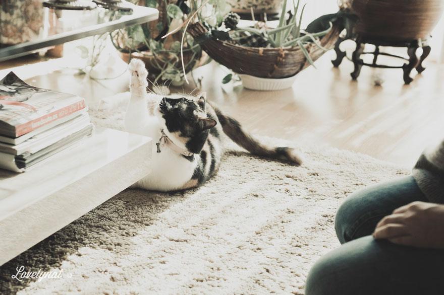 Pets_Lulu_Lovelynat-Photography_082-(1)