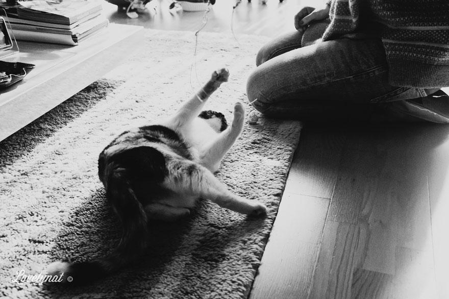 Pets_Lulu_Lovelynat-Photography_086