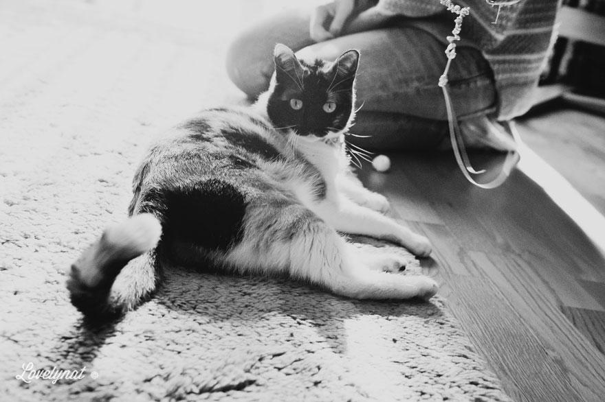 Pets_Lulu_Lovelynat-Photography_088