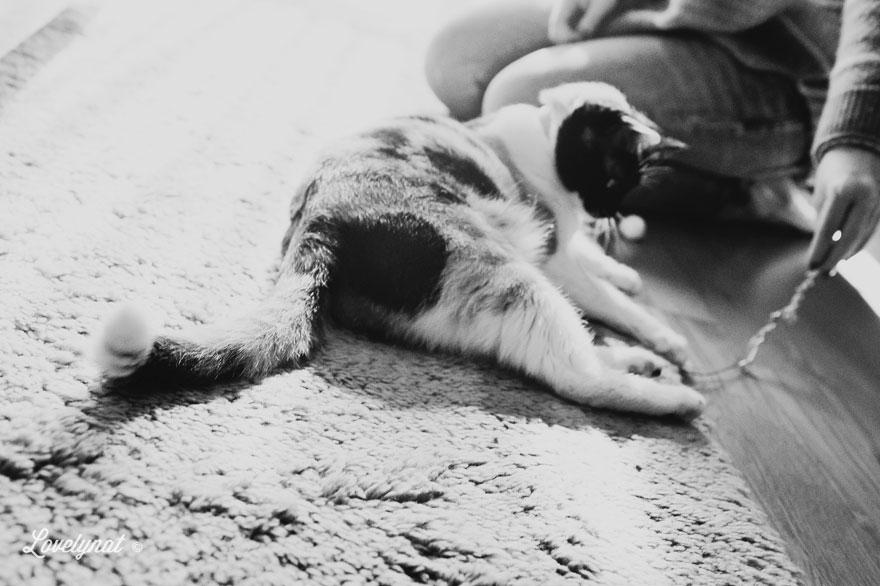 Pets_Lulu_Lovelynat-Photography_089