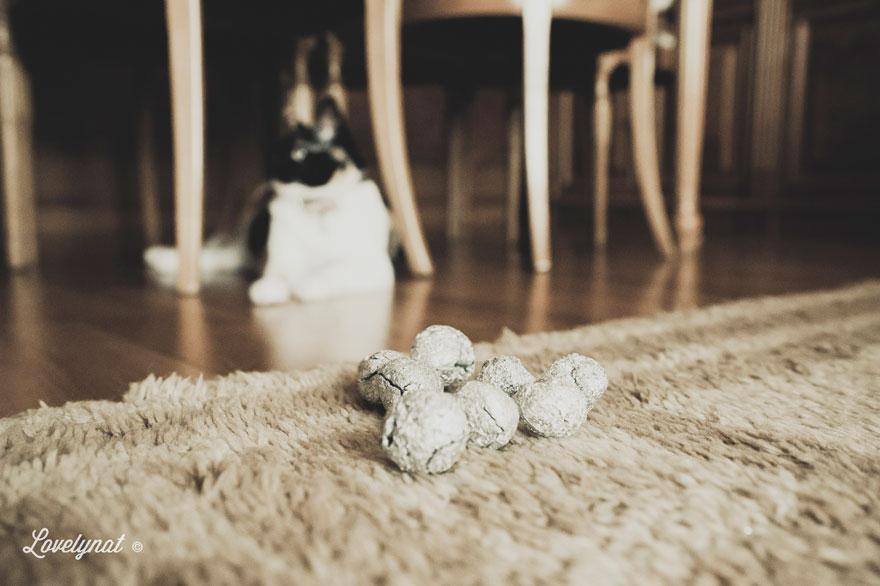 Pets_Lulu_Lovelynat-Photography_106-(1)