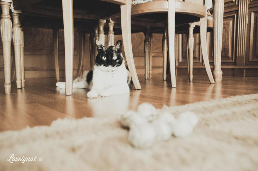 Pets_Lulu_Lovelynat-Photography_107-(1)
