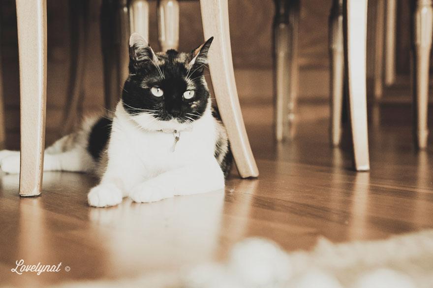 Pets_Lulu_Lovelynat-Photography_108-(1)