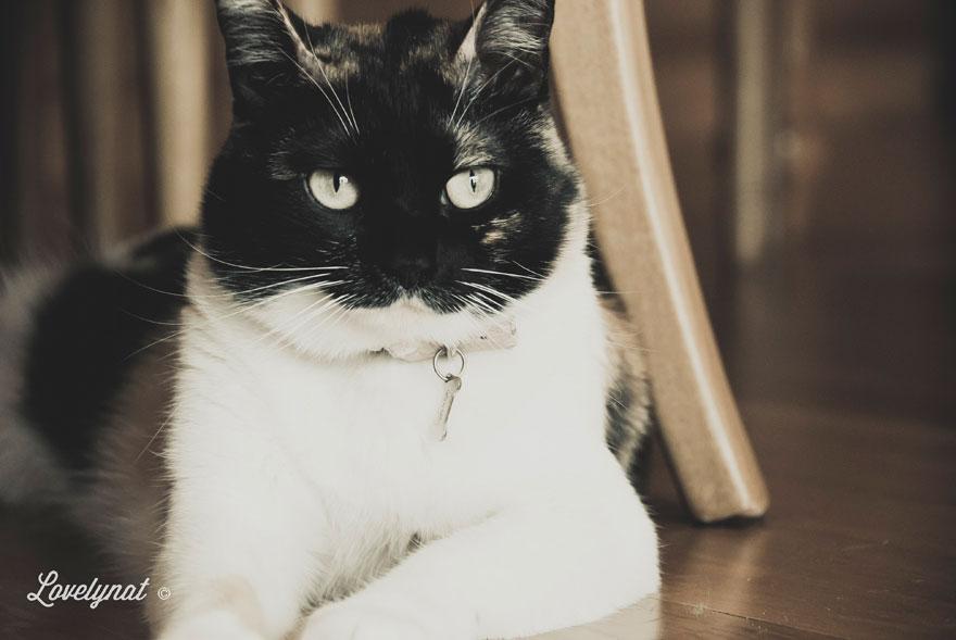 Pets_Lulu_Lovelynat-Photography_109-(1)