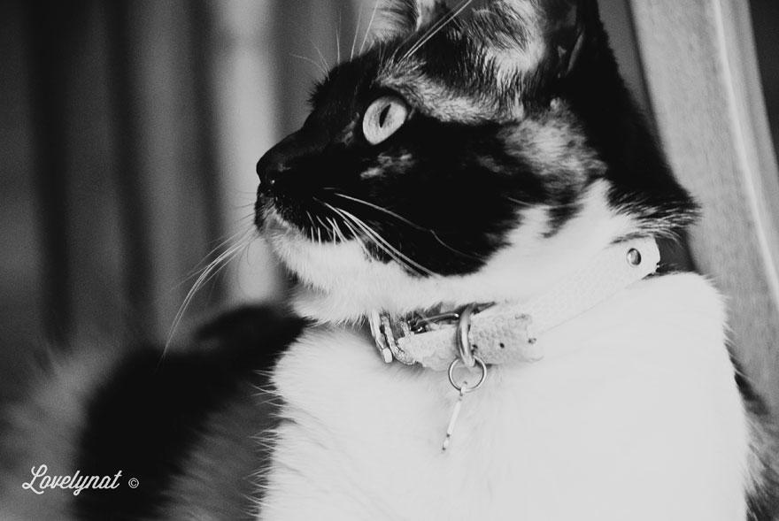 Pets_Lulu_Lovelynat-Photography_112