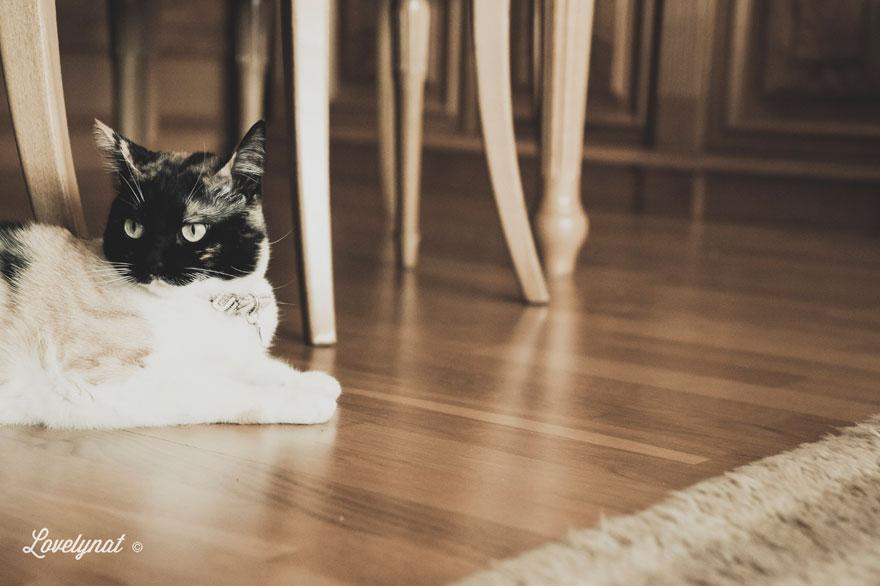 Pets_Lulu_Lovelynat-Photography_114-(1)