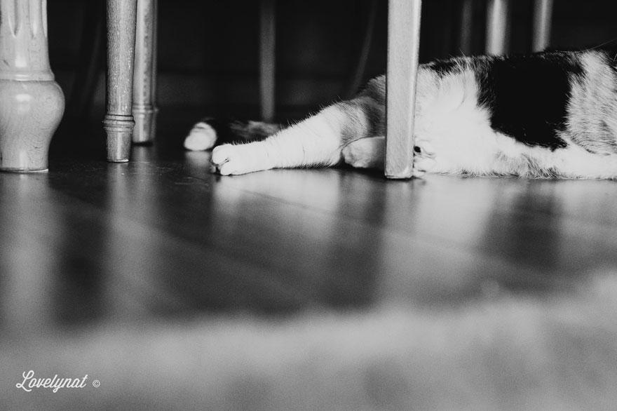 Pets_Lulu_Lovelynat-Photography_115