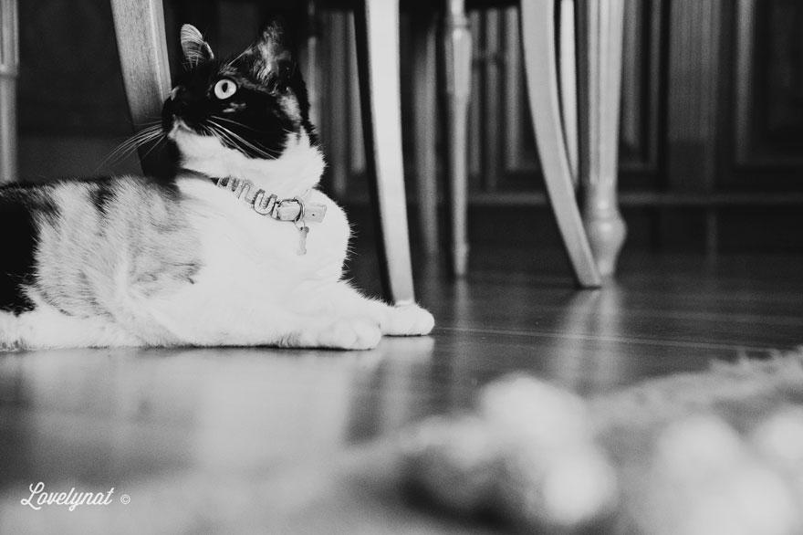 Pets_Lulu_Lovelynat-Photography_116