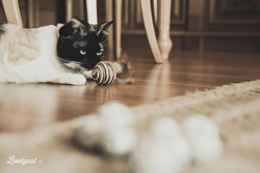 Pets_Lulu_Lovelynat-Photography_118-(1)