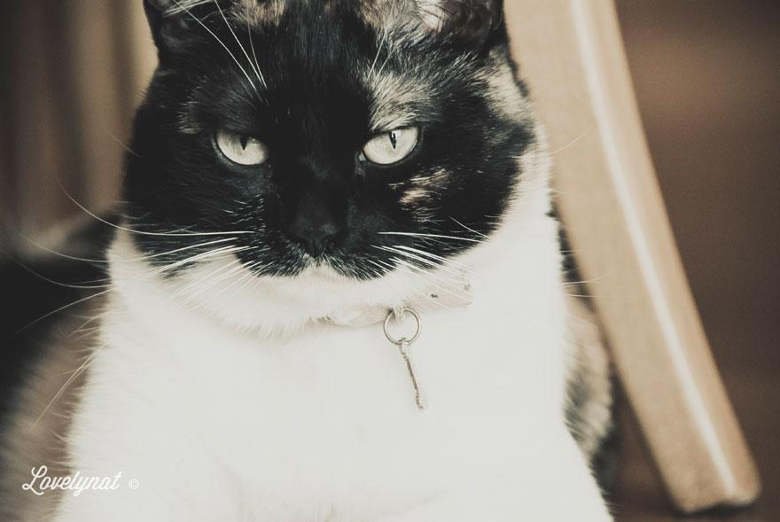 Pets_Lulu_Lovelynat-Photography_119-(1)