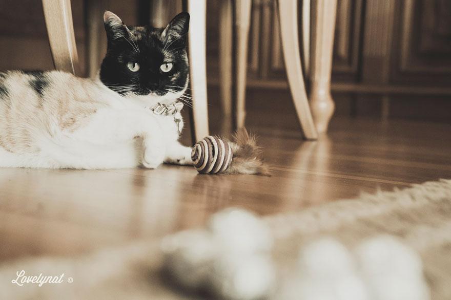 Pets_Lulu_Lovelynat-Photography_120-(1)