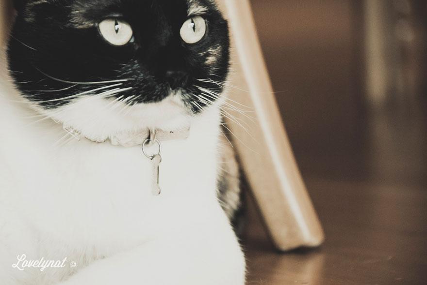 Pets_Lulu_Lovelynat-Photography_122-(1)