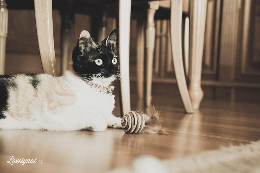 Pets_Lulu_Lovelynat-Photography_123-(1)