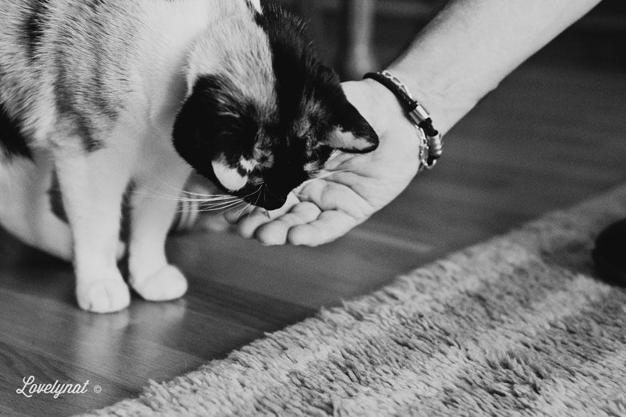 Pets_Lulu_Lovelynat-Photography_125