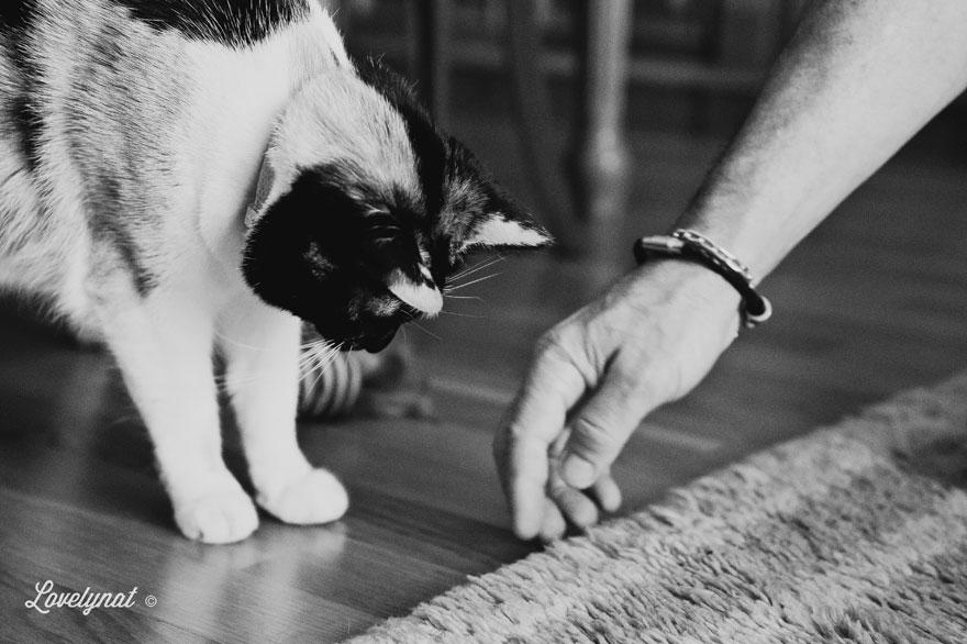 Pets_Lulu_Lovelynat-Photography_126