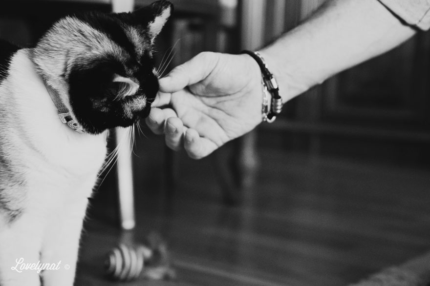 Pets_Lulu_Lovelynat-Photography_128