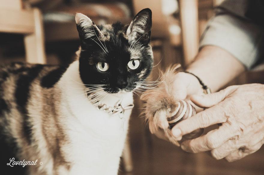 Pets_Lulu_Lovelynat-Photography_132-(1)