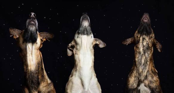 20169_35573_perros-noche_584_314