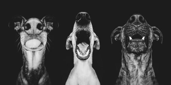 20172_35576_perros-boca_584_290
