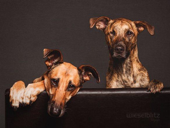 20176_35580_perros-comodos_584_438